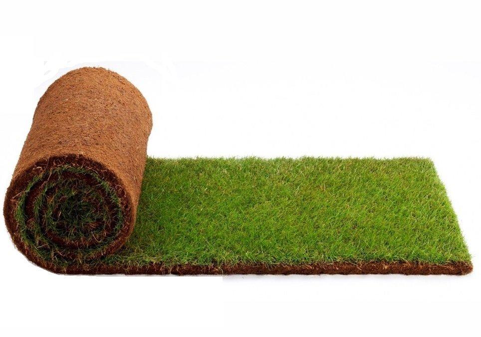 газонная трава пошла в колос что делать такие магнитные