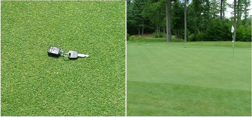 http://gazonov.com/images/upload/Creeping%20Bentgrass.jpg