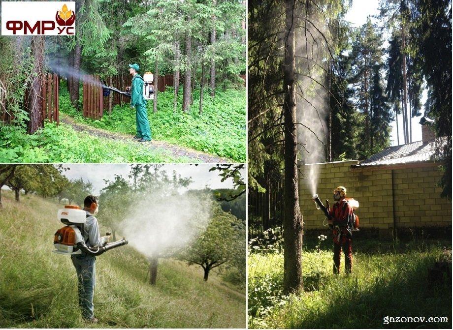 http://gazonov.com/images/upload/Gazonov.com-Клипер.jpg