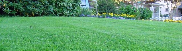 http://gazonov.com/images/upload/lawn_gaz.jpg