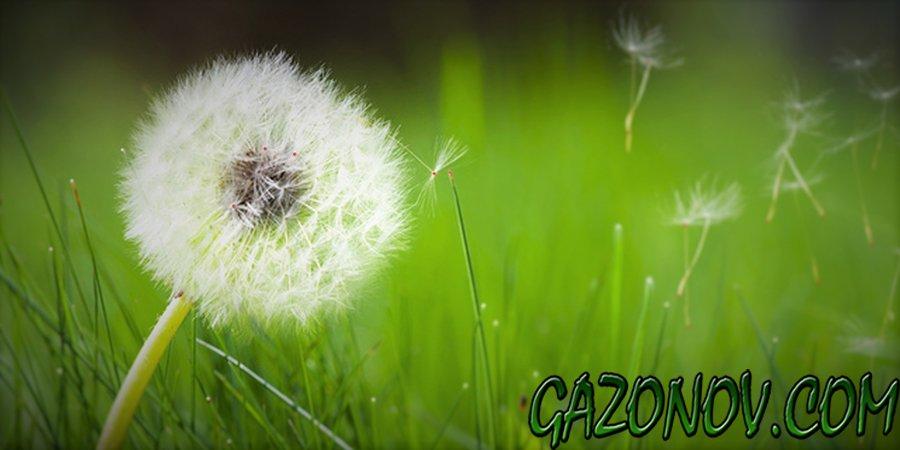 http://gazonov.com/images/upload/sornjakinagazone.jpg