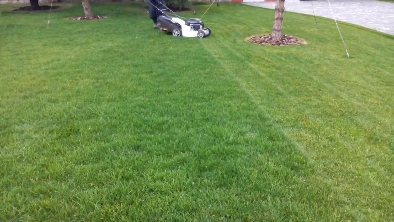 обзор трав для спортивного газона