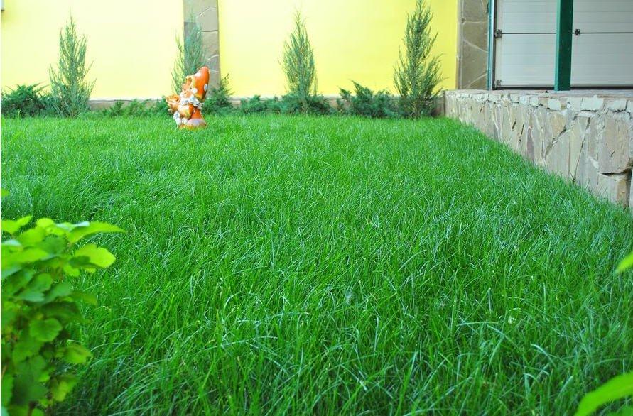 рейтинг трав для газона