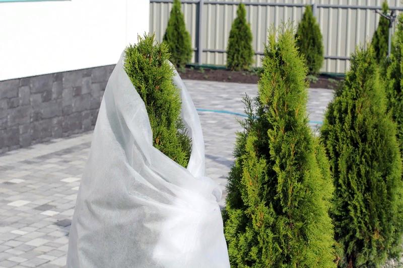 укрытие деревьев спанбондом