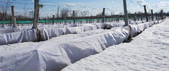спанбонд для укрытия растений зимой
