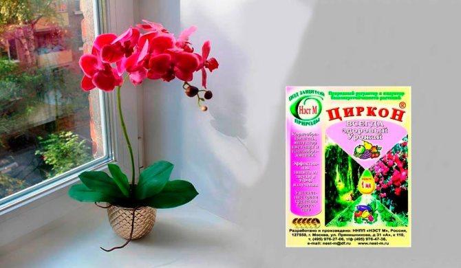 Как применять циркон для растений