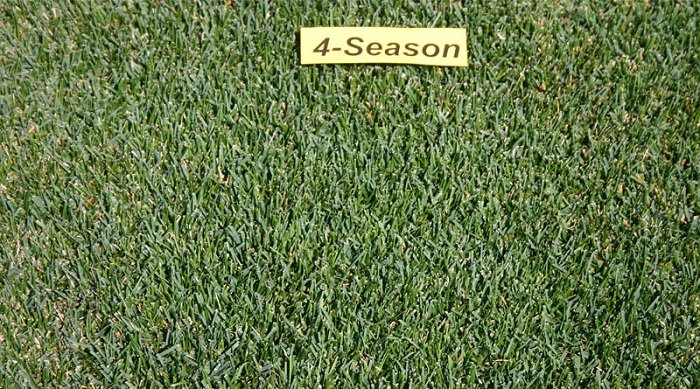 https://gazonov.com/images/upload/4-Season-gazonovcom.jpg