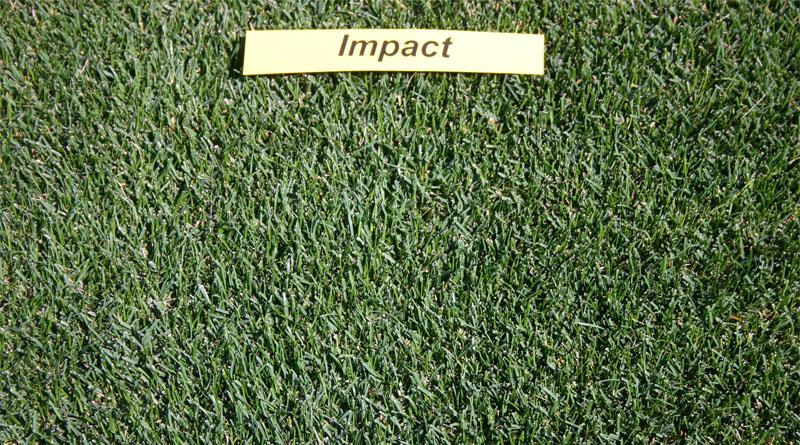 https://gazonov.com/images/upload/Impact%202008.jpg