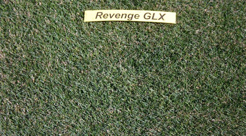 https://gazonov.com/images/upload/Revenge_GLX_2008.jpg