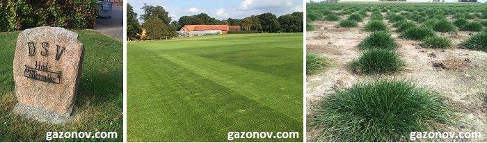 https://gazonov.com/images/upload/dsv-eurograss-germany-gazonov.jpg