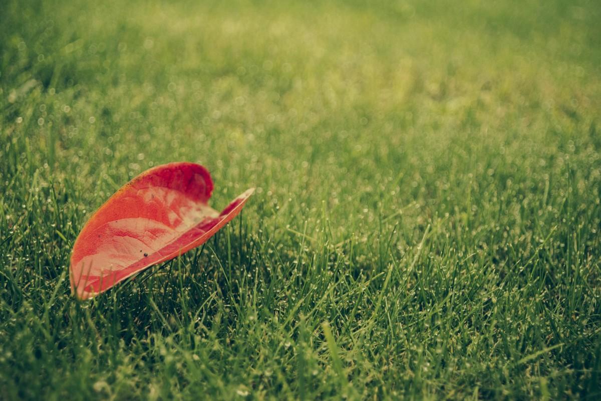 Посев газона осенью