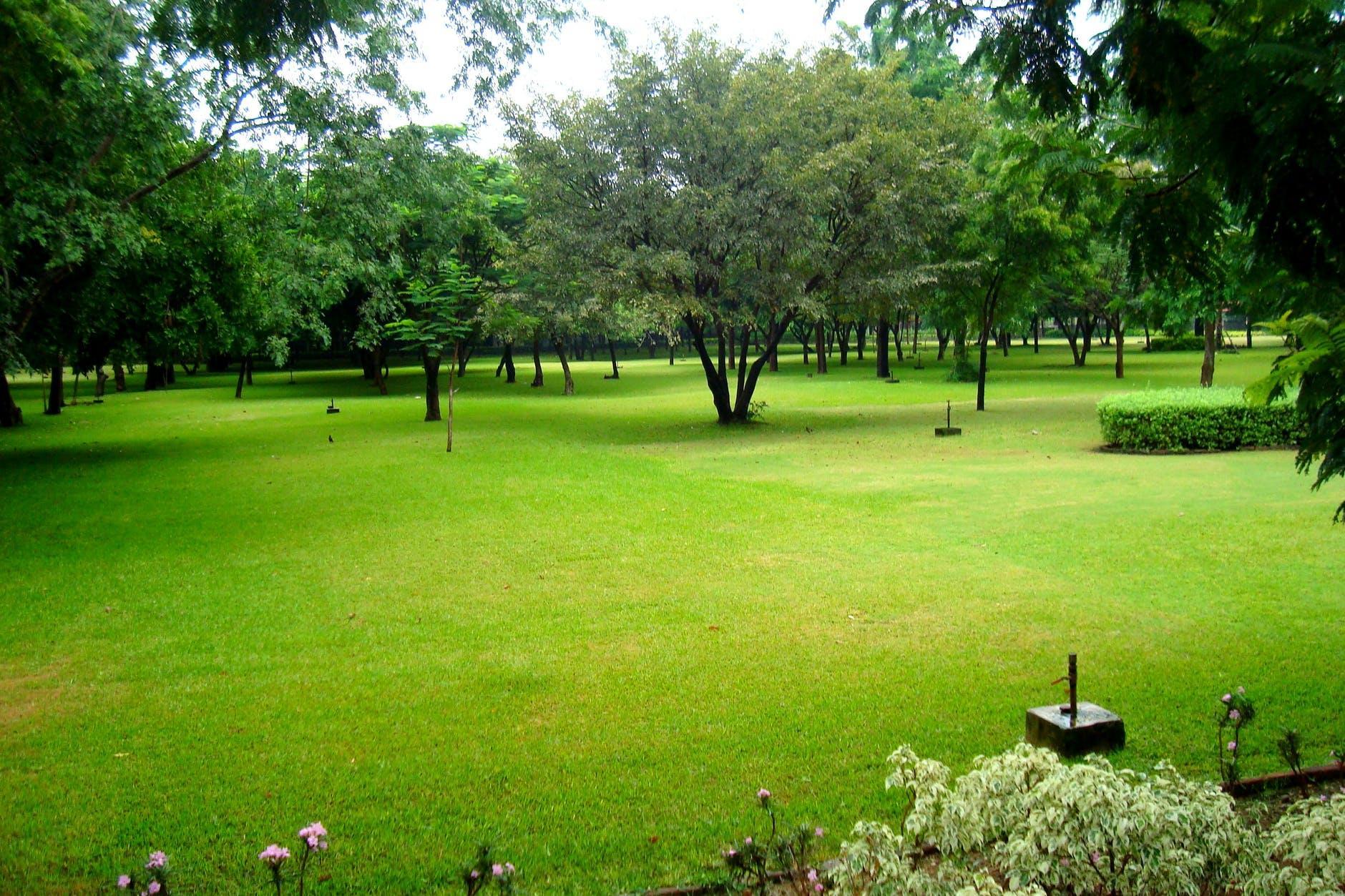 Преимущества и недостатки посадки газона осенью